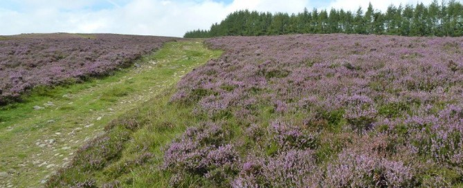 September Glenshee Heather
